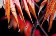 Tears of Autumn. Ferri