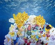 Korallenlandschaft.