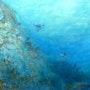 Squid Deep. L. Chan