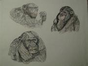 Nuestros amigos los chimpancés. Jean-Pierre Lemoine