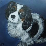 Chiara, a young cavalier king charles, according to personal photo.