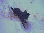 Piper, aux pays des Elfes des neiges. Doowmée