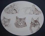 Los ojos de los gatitos. Jean-Pierre Lemoine
