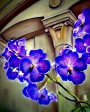El orchidée'Vanda '.