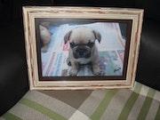Meine kleine Französisch Bulldog.