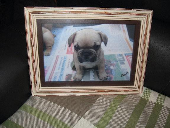 Meine kleine Französisch Bulldog. Cachou Cachou