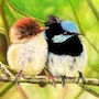 Lovebirds. Bernard Sannier