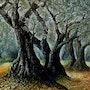 Under olive grove. Jean-Marc Estellon