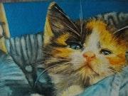 Kitten ausgesetzt.