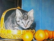 Chat aux oranges.