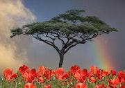 Nature in its beauty. Max Parisot Du Lyaumont