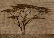 Wood. Max Parisot Du Lyaumont