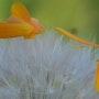 Semillas y flores. Martine Dugue