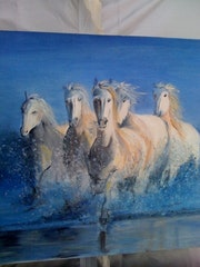Chevaux sauvages.