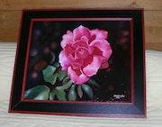 Rosa de mi jardín, también se desvaneció rápidamente, pero inmortalizada.