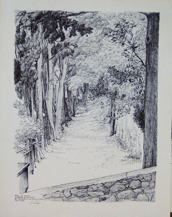 Avenida de cipreses en la rosaleda del monasterio de Cimiez, Niza.. Dominique Marchal Dominique Marchal