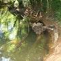 Ptérosaure échoué sur la rive. Elfi
