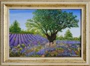 Lavender fields under a sky of provence.