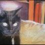 Le chat aux yeux dorés. Miaolo