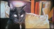 Le chat aux yeux dorés.