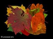 Leaves3 - originalgraphic limitada - Mario Strack.