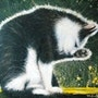 Le chat au soleil, à sa toilette. Miaolo