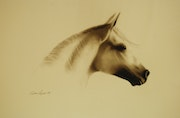 Andalucian Horse, signed sepia print of an original graphite pencil drawing. Imagine Arts