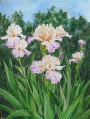 Iris Rosa.