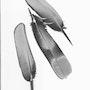 3 Federn, Bild a la Rayografie. Ark-Photographie