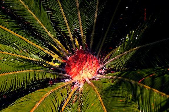 Palms Dreamers Fragonard!. Ferri Ferri