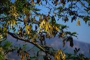 The Tree Treasures. Ferri