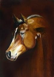 Portrait de cheval anglo arabe.