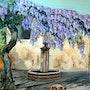 Magnifique glycinesur une petite place dans mon village avec une belle fontaine. Andre Blanc