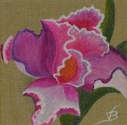 Wild Iris Blume Purple Rose.