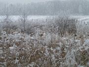 Behind my house three Winterspring.
