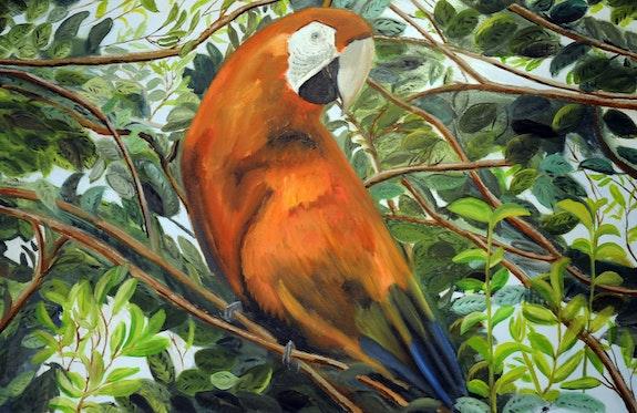 Parrot. Belle oiseaux exotiques au plumage dynamique.. David Buxton Friendship Gallery.