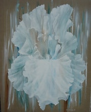 Transparencies, turquoise and white iris.