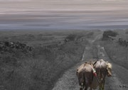 Donkeys on the road to a hill and another hill yet another hill. Max Parisot Du Lyaumont