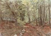 Unterholz im Jura.