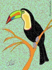 Tucan - limited original graphic - Jacqueline_Ditt.