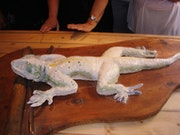 The lizard sculpture.