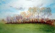 Herbst Birken - Aquarell. Imagine Arts