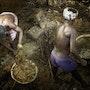 Les Ecuries d'Augias dans une étable du sud de l'Inde. La Cie Des Voyageurs/ D. Almon