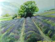 Lavender fields in Provence Drome.