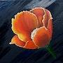 Flores brillantes sobre fondo negro. Lisette