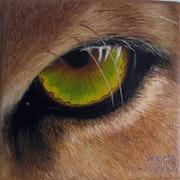 Los ojos del puma.