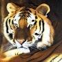 Tiger. Vanessa Moinier