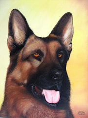 German Shepherd dog portrait.