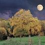 Paisaje de otoño. Max Parisot Du Lyaumont