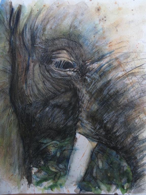 Eléphant - aquarelle. E. Le Prunenec Elisabeth Le Prunenec